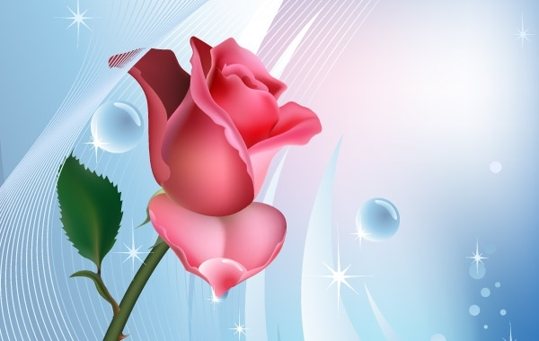 Free Rose on blue background with water bubbles