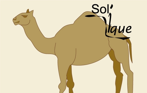 Free Camel