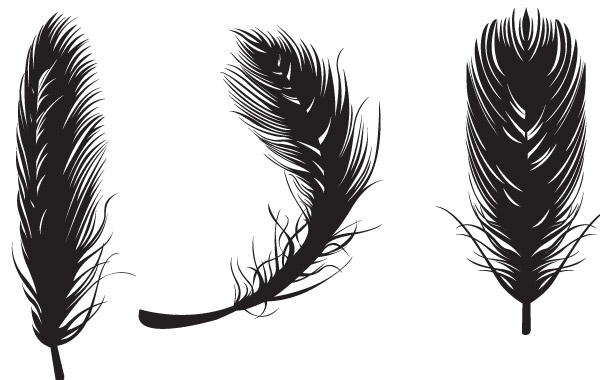 Free Three black feathers