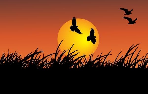 Free Sunshine with flying birds