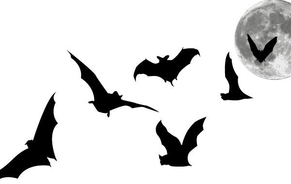 Free Bats and Full Moon