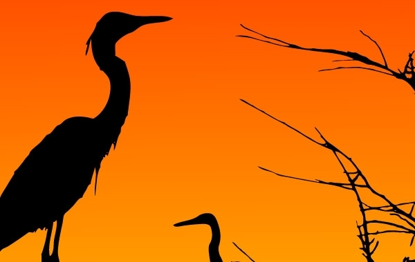 Free Vectors: Two Herons Resting | rtiztikmodo