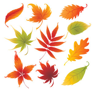 Free Colorful Autumn Leaves