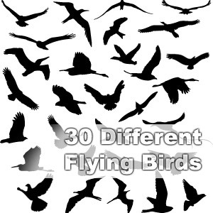 Free 30 Different Flying Birds