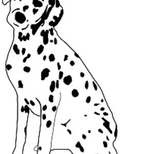 Free Dalmatian Dog Sitting