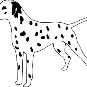 Free Dalmatian Dog