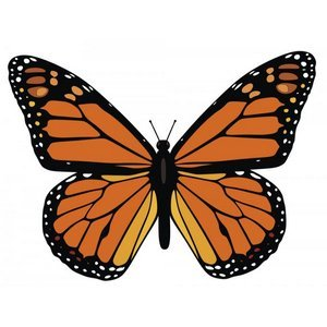 Free Monarch Butterfly