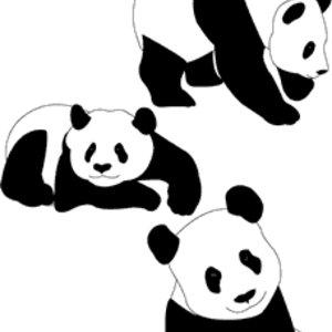 Free Panda Bears
