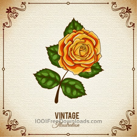 Free Vintage flower illustration with frame