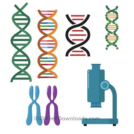 DNA double helix scientific vector set