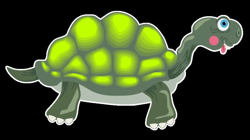 Free Tortoise Cartoon