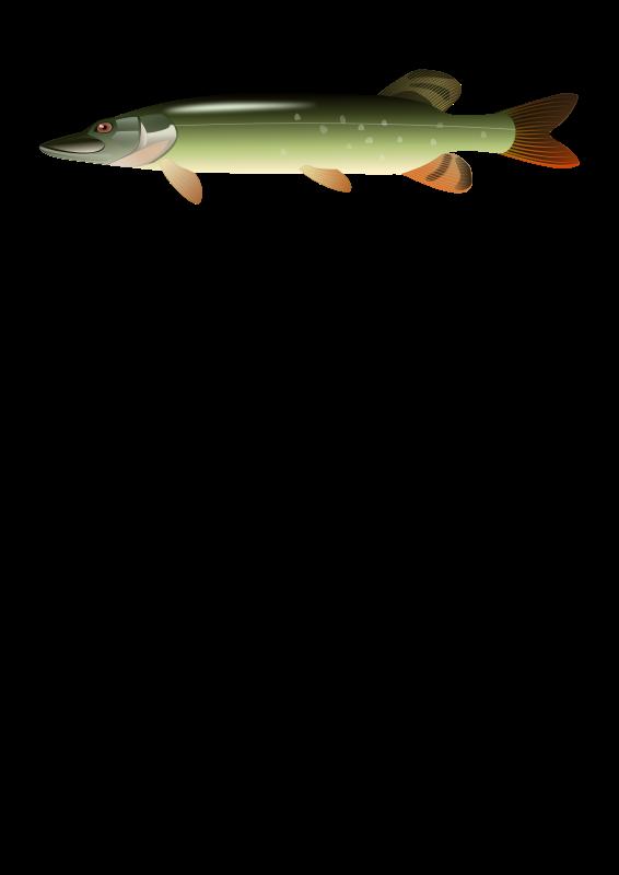 Free Pike