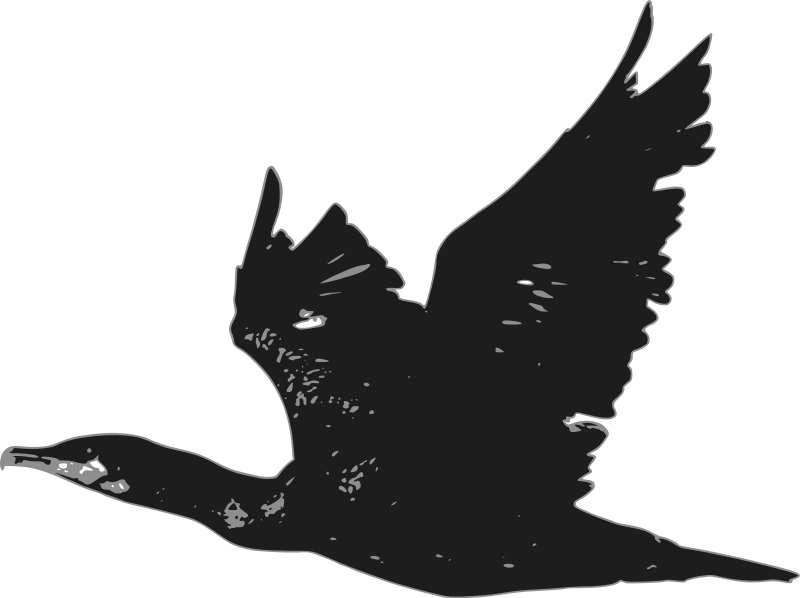 Free Cormorant