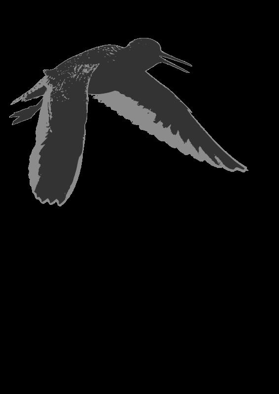 Free Common redshank