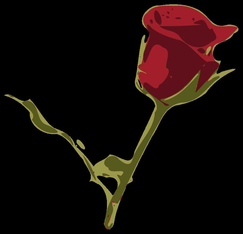 Free rosa