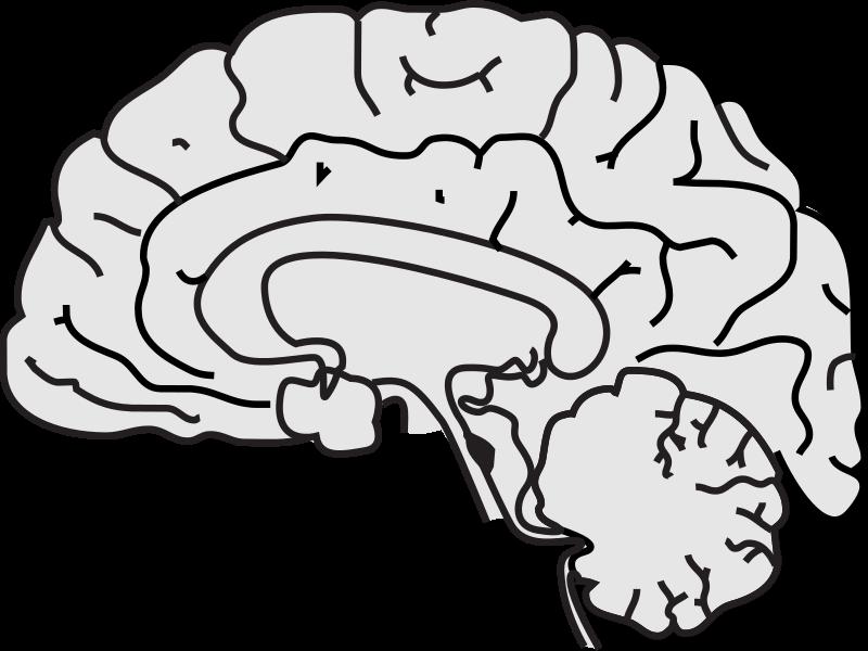 Free Simple Brain