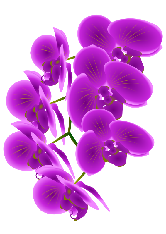Free Orchid Branch