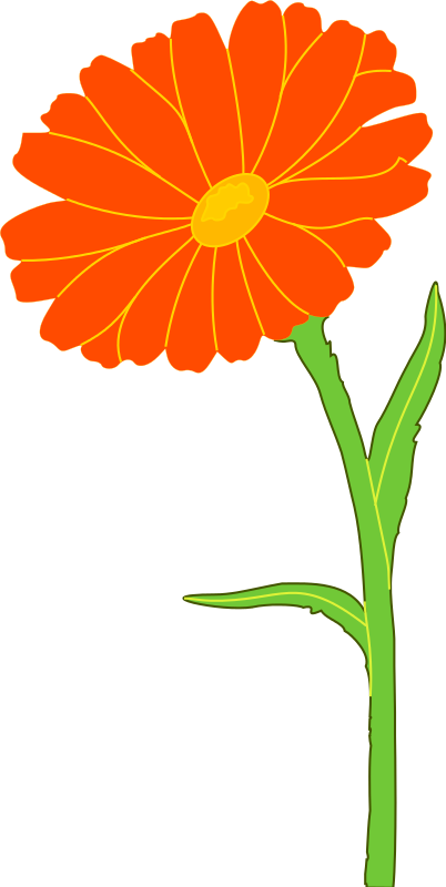 free clipart marigold xavidotron rh 1001freedownloads com marigold flower clipart black and white marigolds clipart