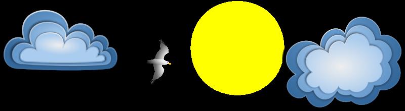 Free Seagull Banner Remix