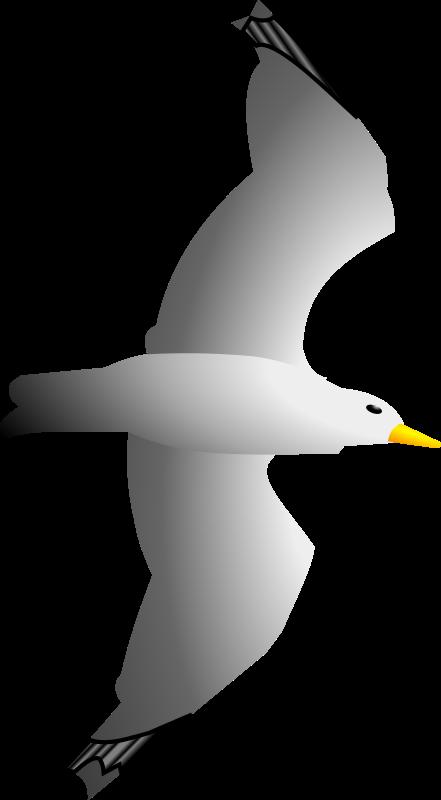 Free Seagull Remix