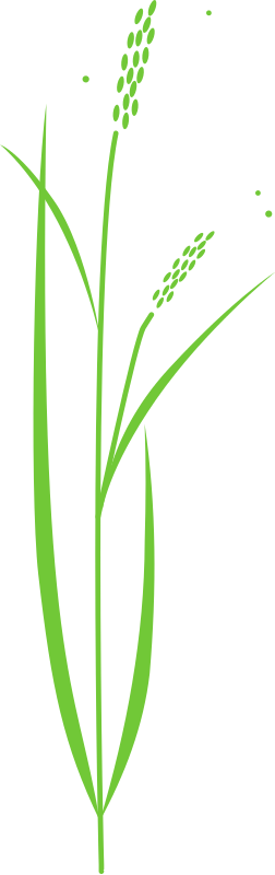 Free Rice plant