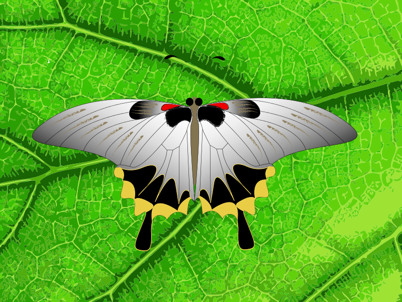 Free butterfly on a leaf