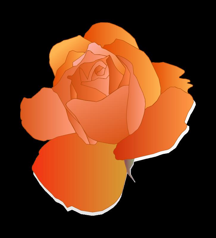 Free Orange Rose