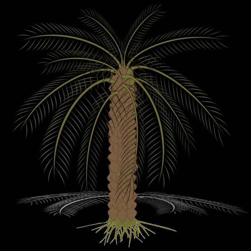 Free palm-02