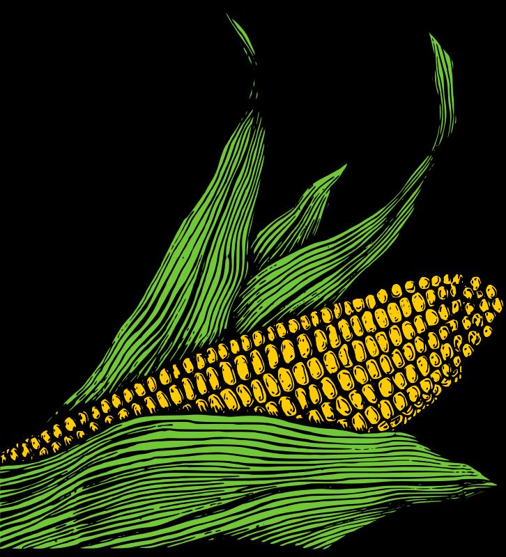 Free Corn on the Cob - Colour
