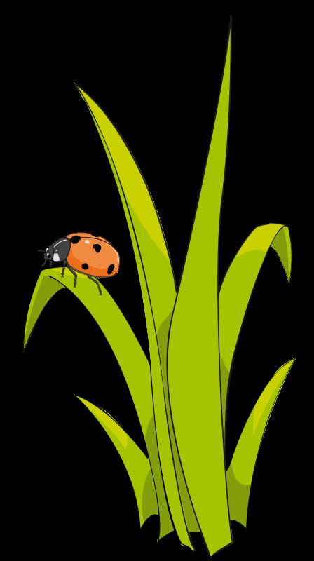 Free Coccinelle sur brin d_herbe - Ladybird on blade of grass.