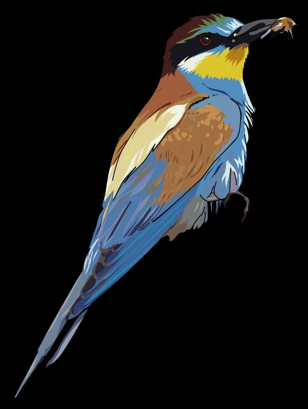 Free European Bee-eater