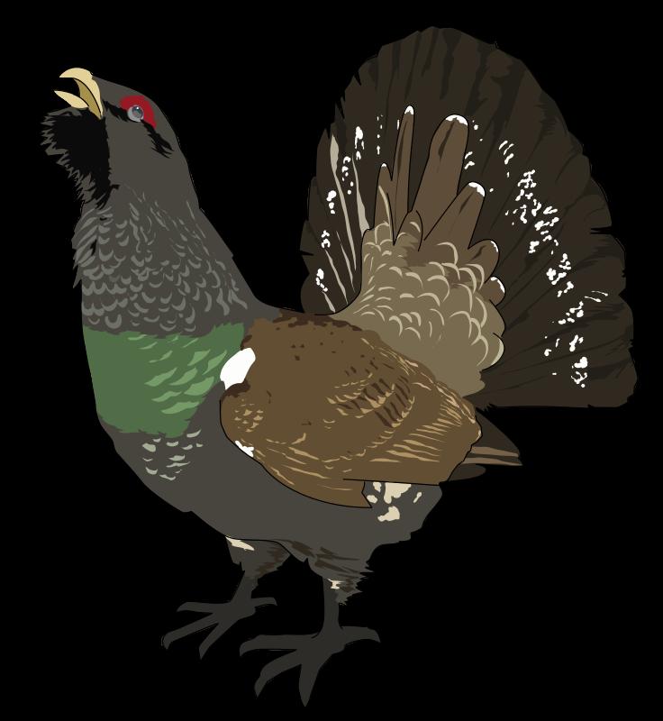 Free Grand tetra (Coq de bruyere) - Grouse