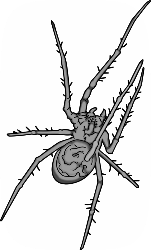 Free Grey Spider
