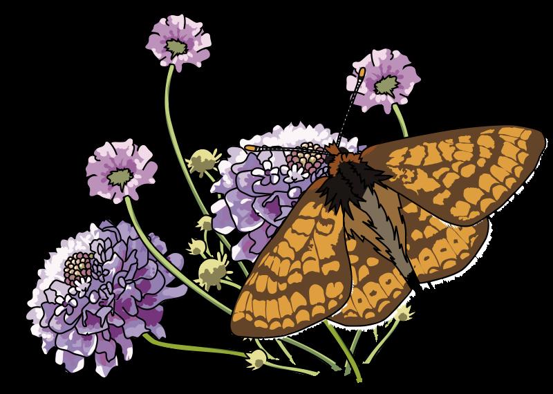 Free Papillon Damier de la succise - Marsh fritillary butterfly