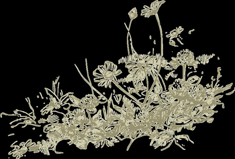Free wildflowers - more detail