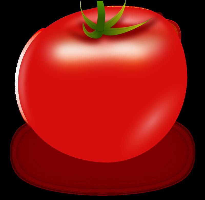 Free Vector Tomato