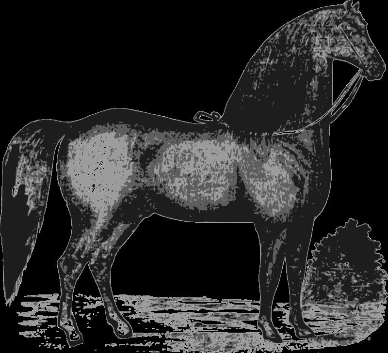 Free Elegant Horse