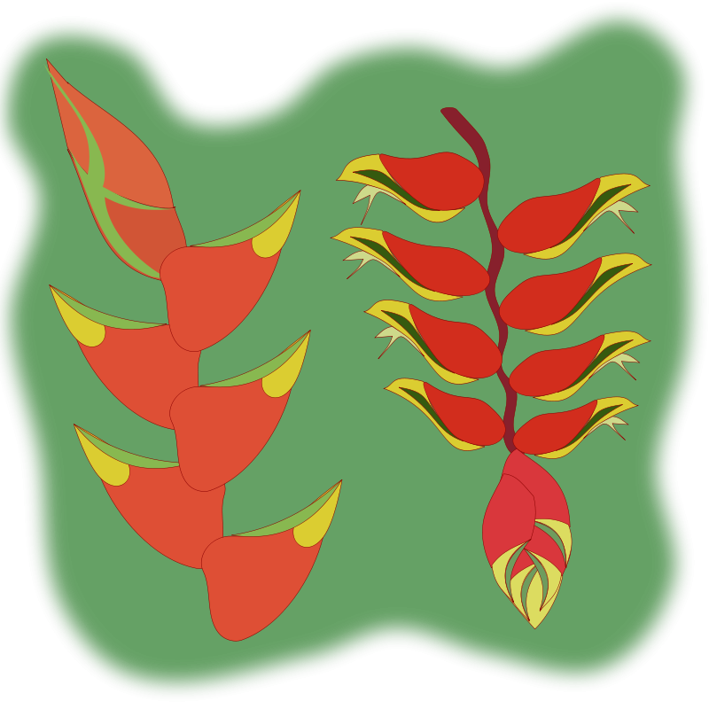 Free heliconia flower