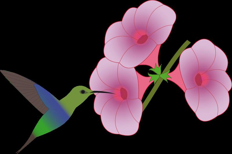 Free pretty hummingbird