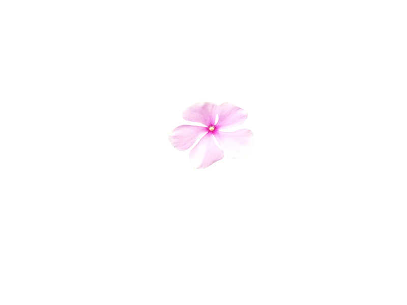 Free Small Pink Flower Silhouette Improved