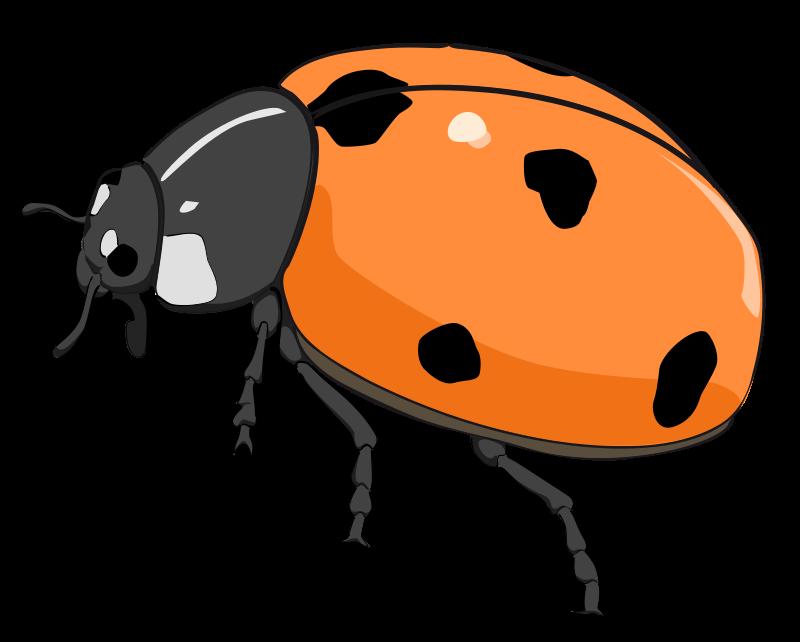 Free Coccinelle, ladybug