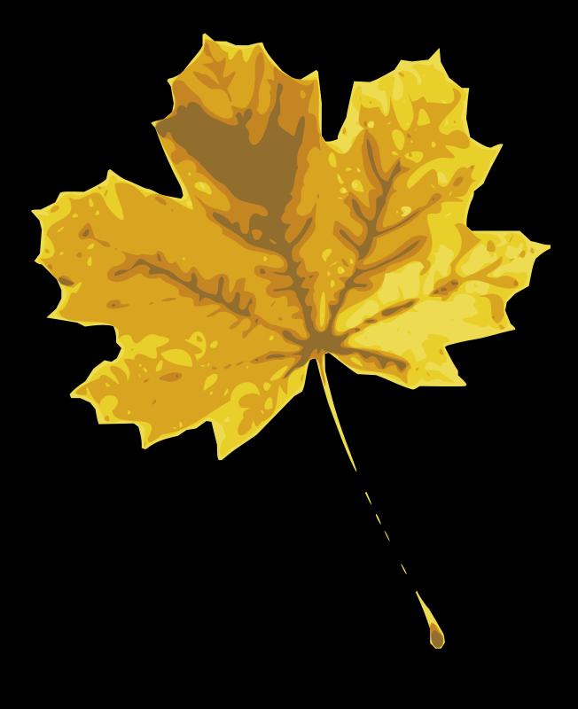Free maple leaf 2