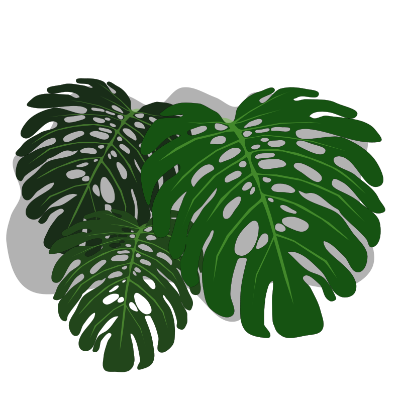 Free Philodendron