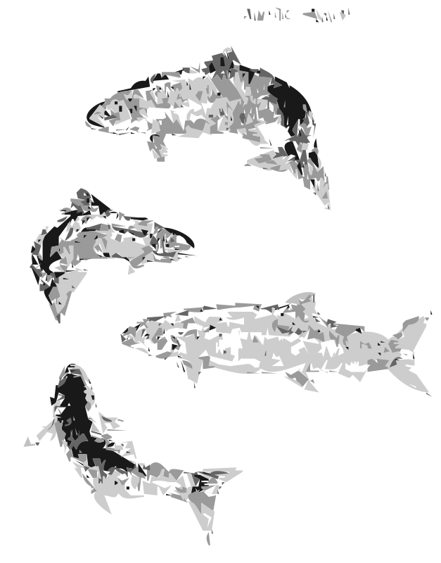 Free Atlantic Salmon (autotrace)