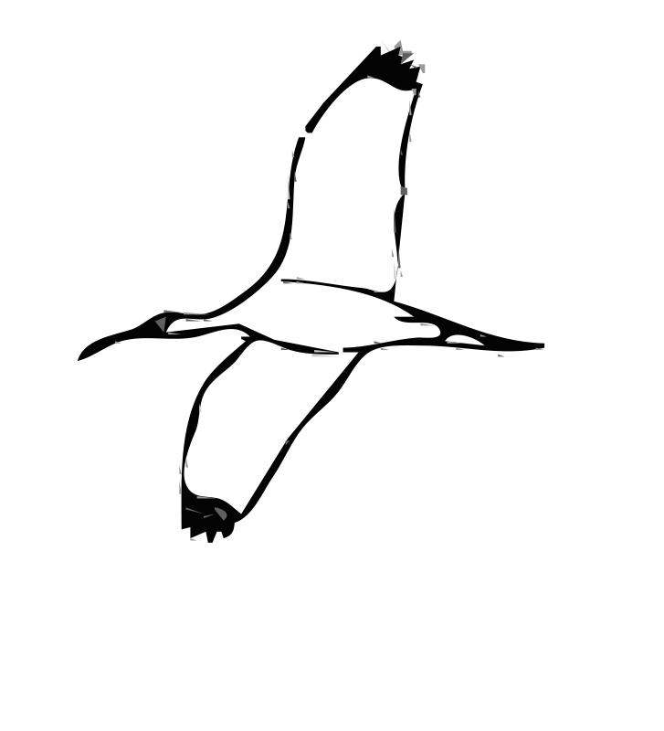 Free Wood Ibis 2