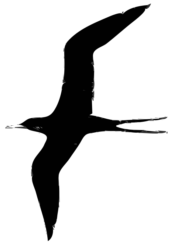Free frigate bird