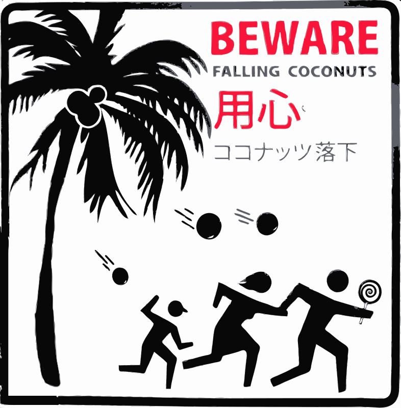Free Beware Falling Coconuts Honolulu, Hawaii