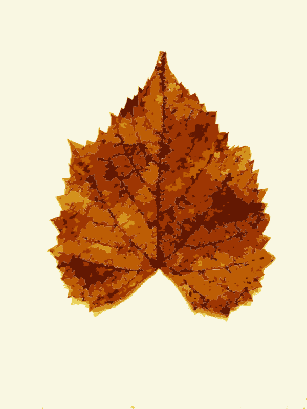 Free Fall leaves from Missouri trees 3