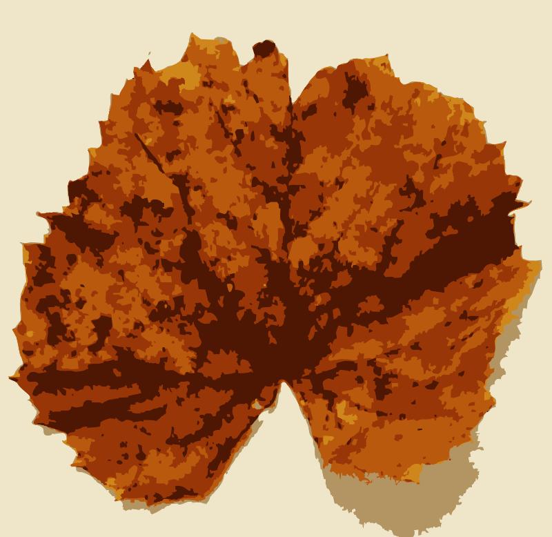 Free Various Missouri tree leaves 2