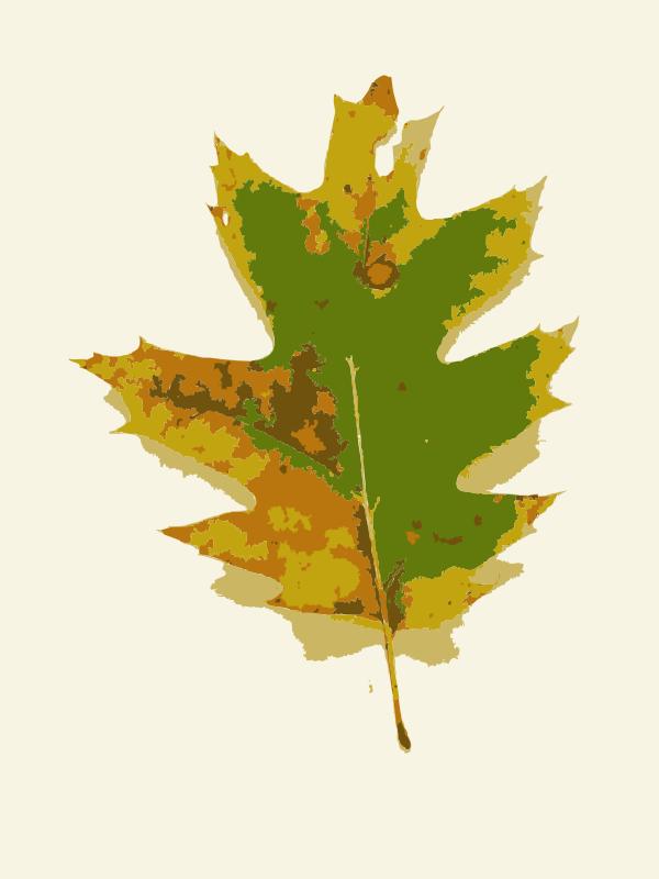 Free Missouri Fall Tree Leaves 1